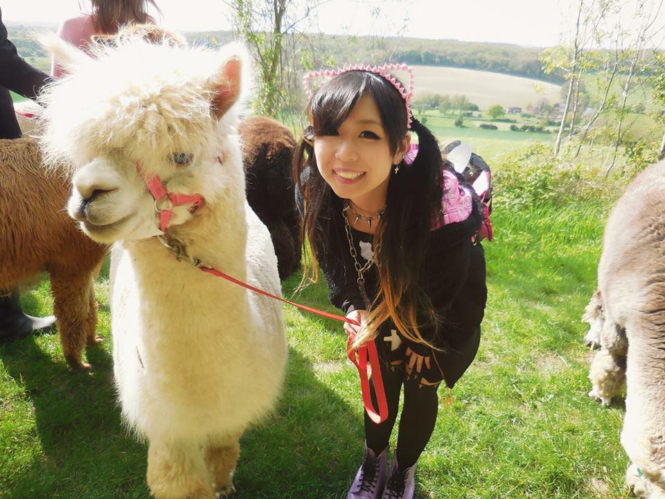 Young girl posing with alpaca