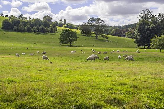 Centurion Way grass and sheet grazing