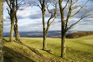 Empty trees at Chanctonbury Ring