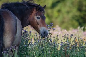 Horse in wild flowers at Knepp Estate