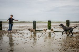Three dogs running to woman on Littlehampton beach
