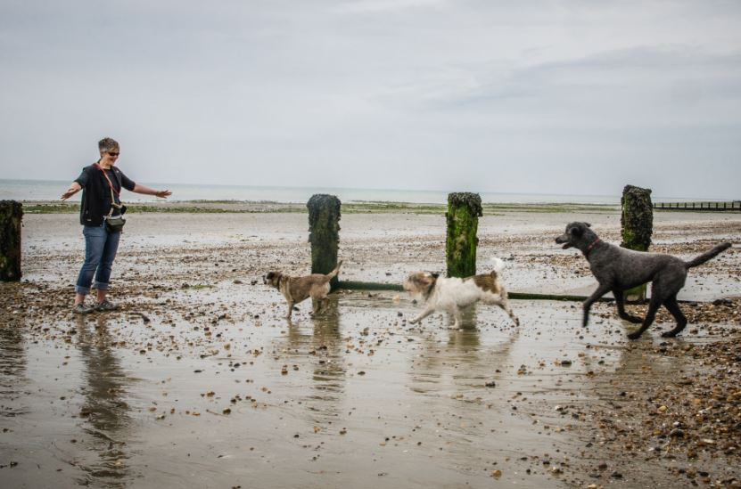 Three dogs running to woman on Littlehampton beach