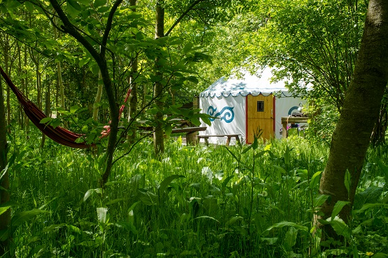 Plush Tents Glamping accommodation through the green trees and grasses