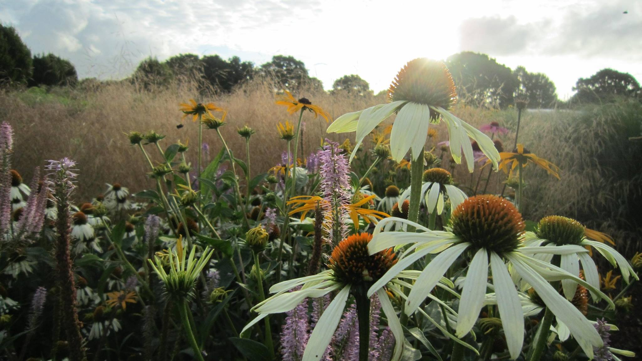 Close up image of wild flowers with the sun shining through them