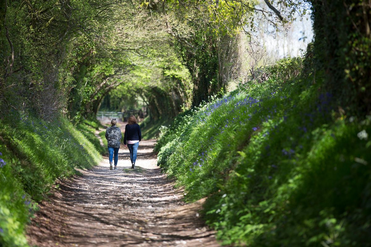 People taking a stroll down woodland path