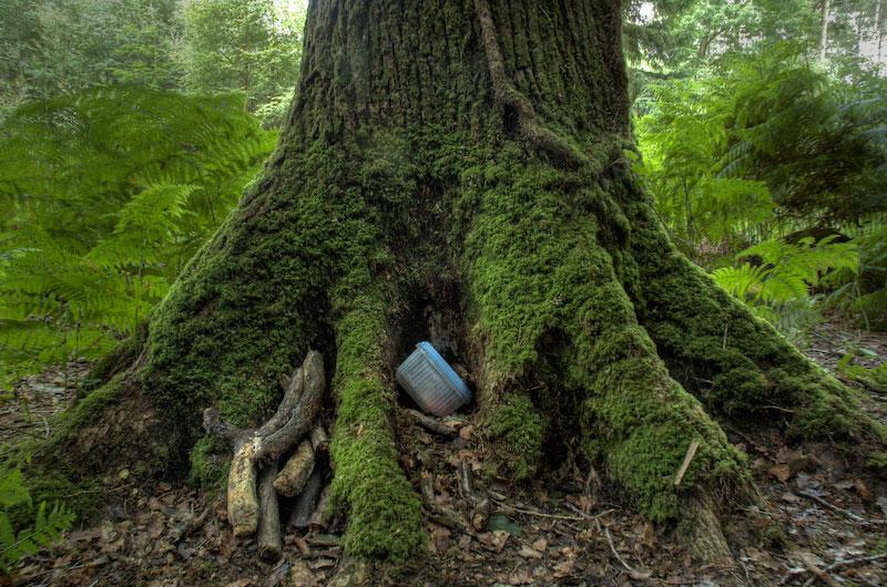 Geocaching hidden in tree