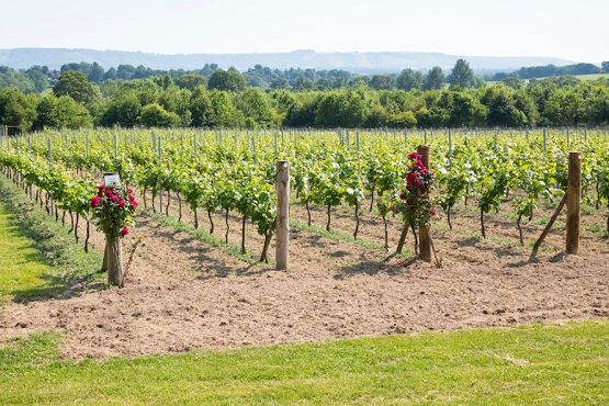 Luxury vineyard experience West Sussex