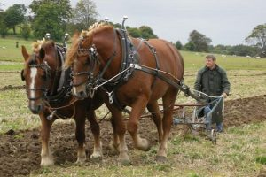 Horse and carriage at Autumn Countryside Show