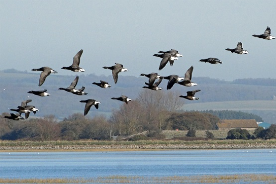 Wildlife photography workshop at Pagham Harbour