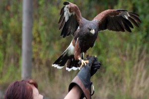 Huxleys Bird of Prey centre