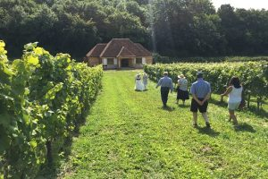 Vineyard tour Wiston Estate