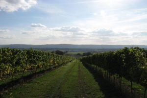 Upperton Vineyard landscape