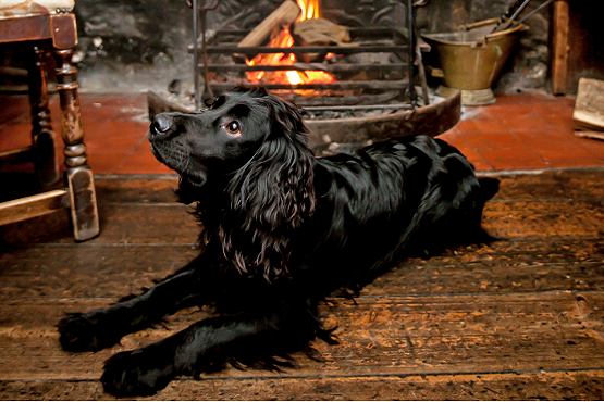 Winter pub dog in front of fire