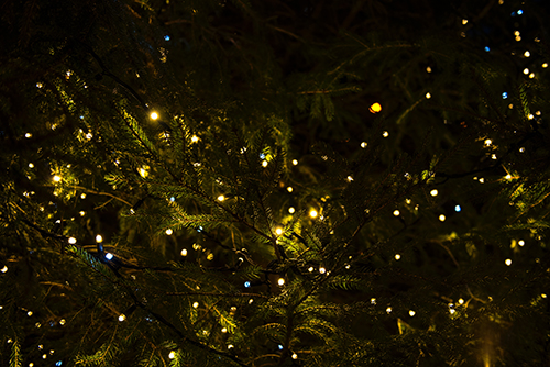 Festive lights on Christmas trees West Sussex