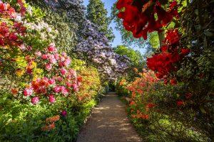 Beautiful english country gardens in full bloom at Leonardslee Gardens