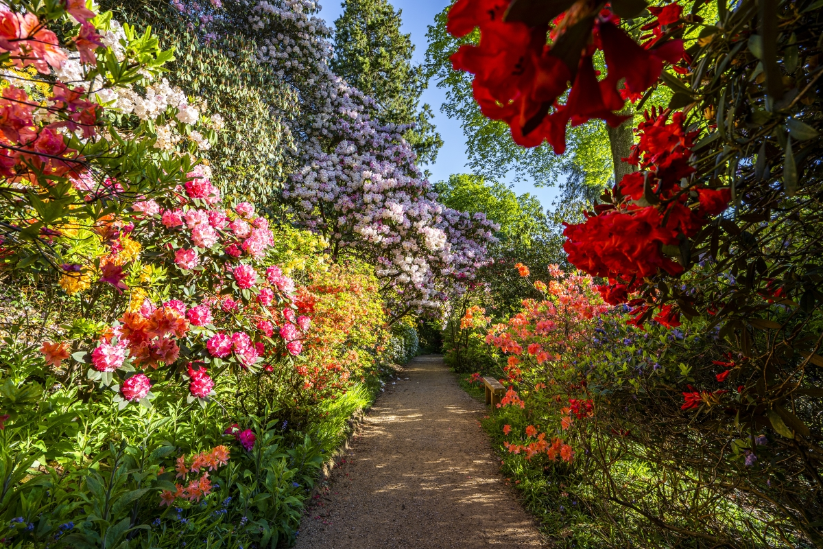 Beautiful english country gardens in full bloom at Leonardslee Gardens