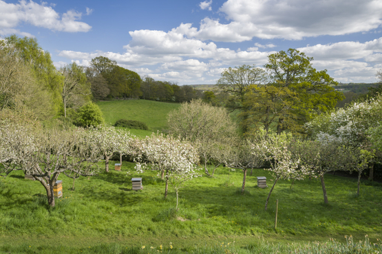 The Orchard at Standen, West Sussex