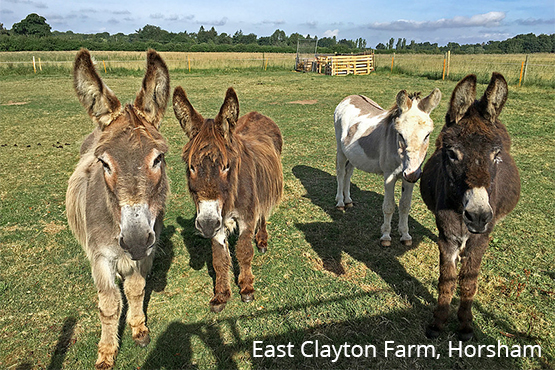 What better way to take in some wholesome woodland scenery than with a donkey friend by your side? Adults and children alike will love learning to walk and groom donkeys in a rural setting.