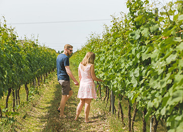 Couple walking through vines at a vineyard in Sussex