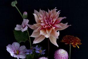 Dianna Jazwinski Photography - Botanica