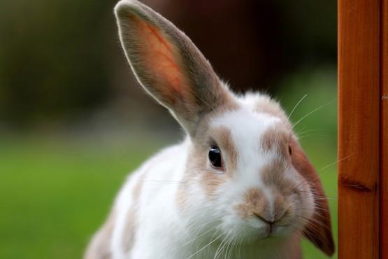 Easter Bunny Hop - Children's Easter Disco