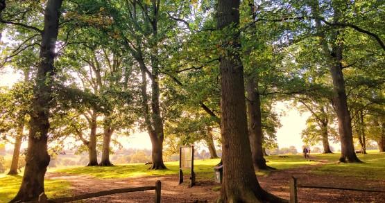 Old trees at Petworth