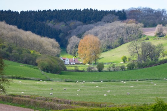 South Downs landscape wit hfields and farmhouse surrounded by trees
