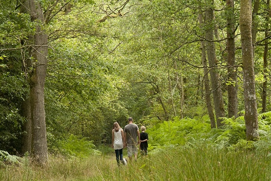 Family walking through tall trees and long grass at Ebernoe Common Nature Reserve