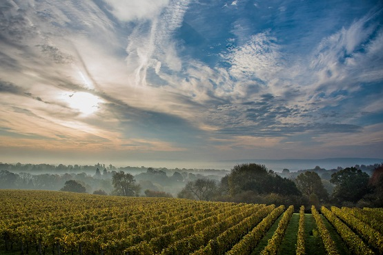 Sun rising over the misty Downs at Ambriel vineyard