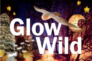 Glow Wild promotional image showing the enchanting winter lantern trail at Wakehurst, Kew's wild botanic gardens