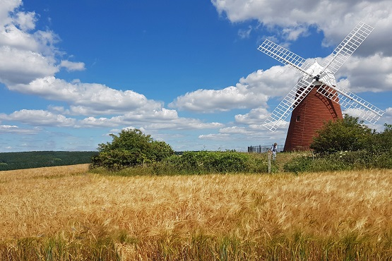 West Sussex Windmill in a field with blue skies