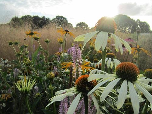 Sussex Prairie Garden near sunset