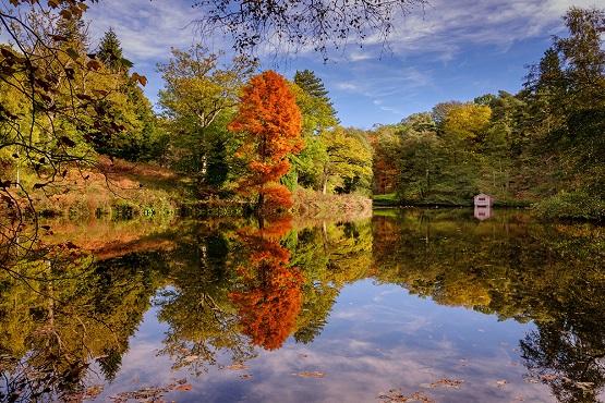 Wakehurst's autumn Westwood Lake reflection