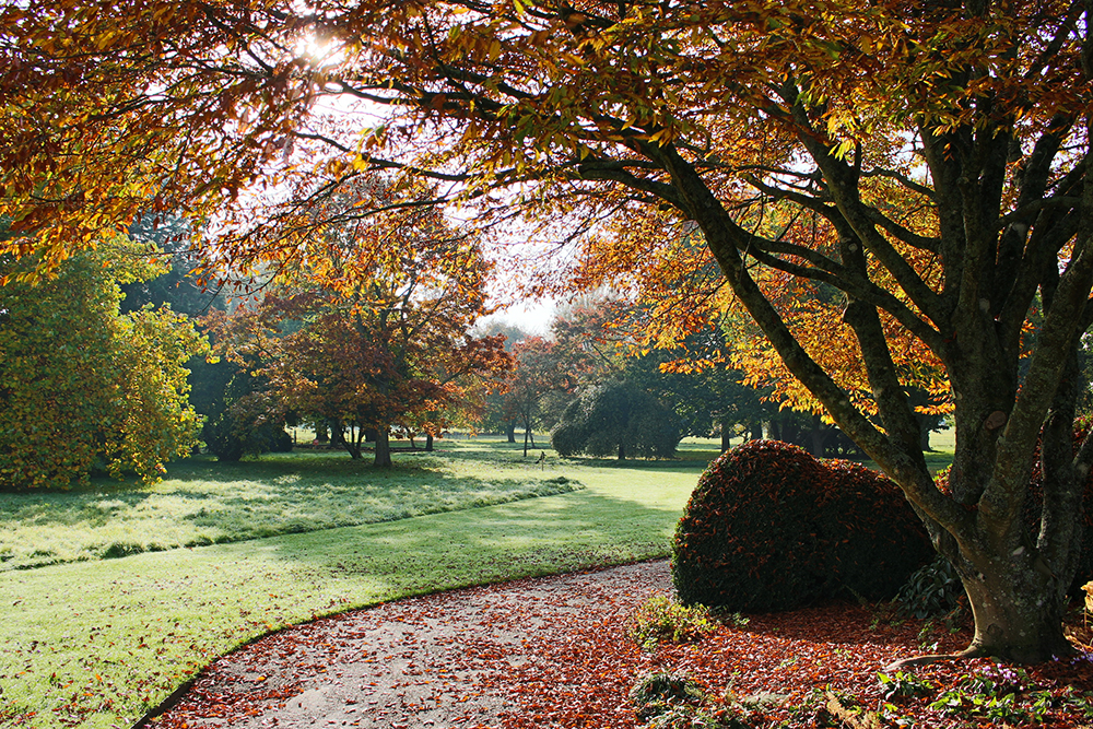 Landscape photo of orange coloured trees and leaves on the ground at West Dean Gardens