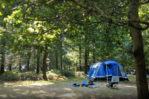 Blue tent set up in woodland forest
