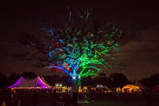 A lit up tree at night at the Into the Wild festival